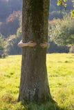 拥抱结构树妇女 免版税库存图片