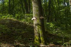 拥抱结构树 拥抱树a的手特写镜头  库存照片