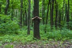 拥抱结构树 拥抱树a的手特写镜头  免版税库存照片