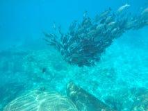 拥挤鱼在安达曼海 免版税库存照片