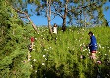 拥挤,大叻花公园,节日,春天,游人 库存照片