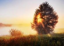 阻拦日出的树 库存照片
