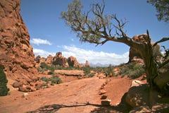 拱门国家公园,在前景的树 免版税库存照片