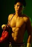 拳击手系列 免版税库存照片