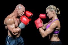 拳击手侧视图有战斗的姿态的 图库摄影