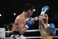 拳击联赛:乌克兰Otamans对俄国拳击队 免版税库存图片