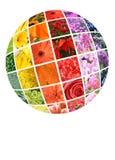 拼贴画五颜六色的花 库存照片
