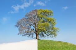 拼贴画夏天结构树与冬天 免版税图库摄影