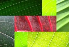 拼贴画绿色叶子 免版税库存照片