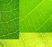 拼贴画绿色叶子 免版税库存图片