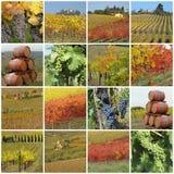 拼贴画五颜六色的葡萄收割期 免版税库存照片