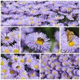 拼贴画五颜六色花卉 免版税库存照片