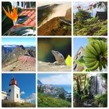 拼贴画海岛马德拉岛 免版税图库摄影