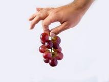 拿着一个小组葡萄的手 免版税库存图片