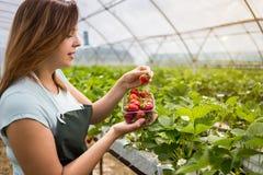 拿着一个水多的被咬住的草莓的妇女入照相机, strawber 免版税图库摄影