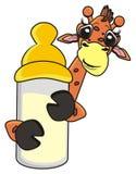 拿着一个瓶从乳头的牛奶的长颈鹿 库存照片