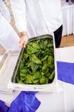 拿着一个碗用新鲜的草本的厨师 免版税库存照片