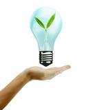 拿着一个闪亮指示充满绿色叶子 免版税库存图片