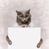 拿着一副白色横幅的猫 库存照片