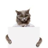 拿着一副白色横幅的猫 免版税库存照片