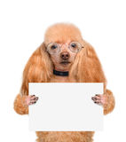 拿着一副空白的横幅的狗 库存照片