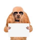 拿着一副空白的横幅的狗 库存图片