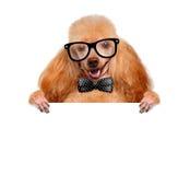 拿着一副空白的横幅的狗 免版税库存图片