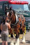拿着一匹重的马的辔的妇女。 免版税库存照片
