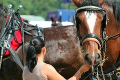 拿着一匹重的马的马勒的妇女。 免版税库存图片