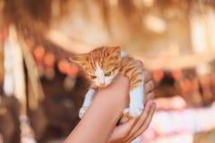 拿着一只小的小猫的手 库存照片