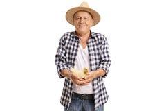 拿着一只小鸭子的年长农夫 免版税库存图片