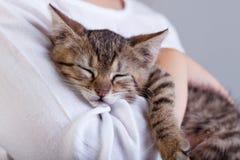拿着一只新的宠物-一只小的小猫 库存图片