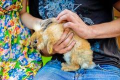 拿着一只红色兔子的年轻夫妇 库存图片