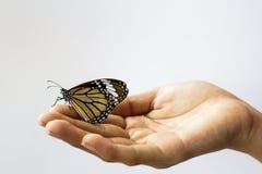 拿着一只美丽的蝴蝶的妇女手。 免版税库存图片