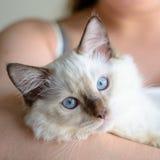 拿着一只逗人喜爱的小猫 免版税库存图片