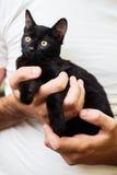 拿着一只黑小猫的人手 免版税库存图片