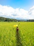 拿着一把黄色伞的妇女在绿色米领域走 免版税库存照片