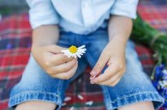拿着一朵美丽的雏菊的孩子手 男孩做一个愿望 免版税库存图片