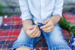 拿着一朵美丽的雏菊的孩子手 男孩做一个愿望 库存图片