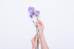 拿着一朵蓝色花的女性手 免版税库存图片