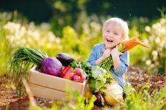 拿着一束新鲜的有机红萝卜的逗人喜爱的小男孩在国内庭院里 免版税库存图片