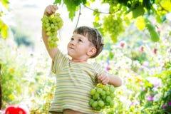 拿着一束葡萄的愉快的小男孩 免版税图库摄影