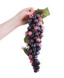 拿着一束葡萄的现有量 图库摄影