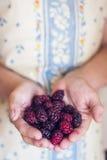 拿着一束黑莓的手 库存照片