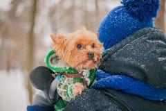 拿着一条狗的女孩在公园在雪的冬天 一条狗的关心在冷天 免版税库存图片