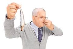 拿着一条腐烂的鱼的资深绅士 免版税库存图片