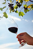 拿着一杯红葡萄酒的手 库存照片