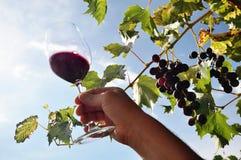 拿着一杯红葡萄酒的手 图库摄影