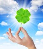 拿着一棵绿色四片叶子三叶草的手 免版税库存照片
