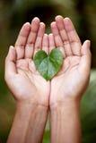 拿着一片心形的叶子的手 免版税库存照片